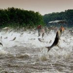 A rio revuelto ganancia de pescadores